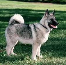 24+ Harga anjing pekingese terbaru