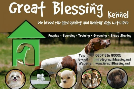 Great Blessing Kennel
